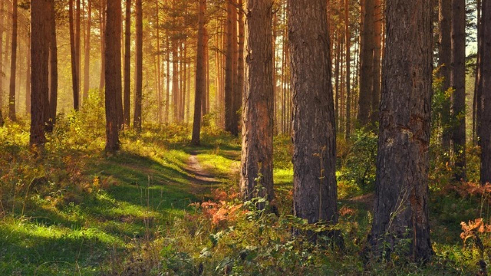 Forest-Pixabay
